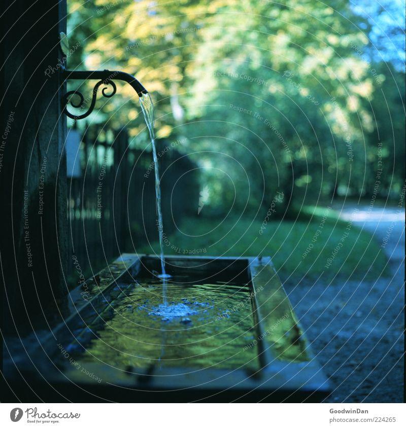 Trinkwasser Natur Wasser alt schön Herbst Umwelt Stimmung Park glänzend nass authentisch einfach Brunnen Unendlichkeit Urelemente viele