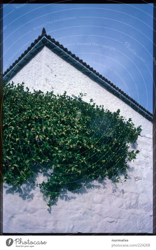 grüne ecke Natur weiß blau Pflanze Blatt Wand Umwelt Mauer Stimmung Kunst Fassade Lifestyle Wachstum wild natürlich