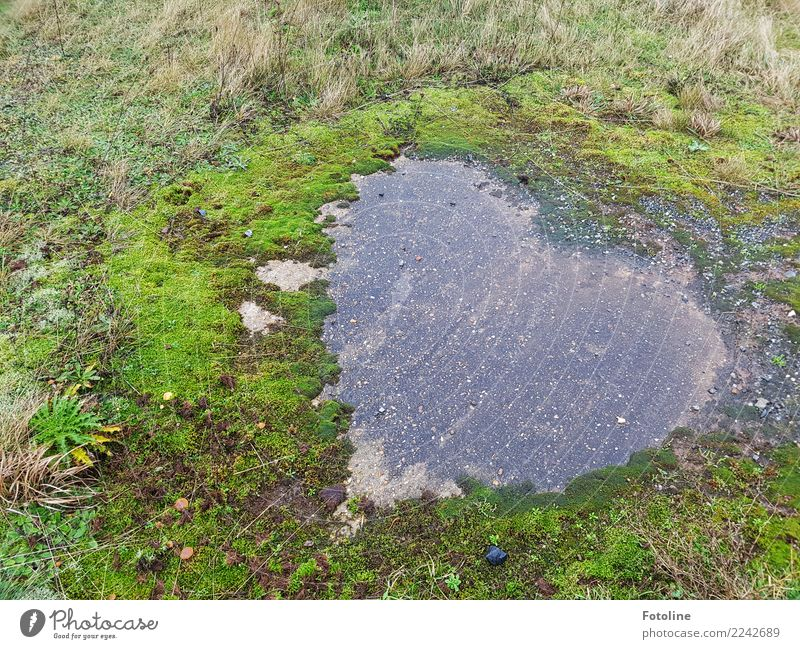 Für euch von Herzen Natur Pflanze grün Winter Umwelt natürlich Gras Stein grau Erde nass fest Moos herzlich herzförmig