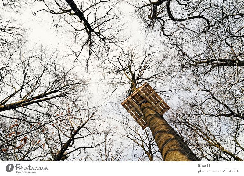 Hier entsteht für Sie unser neuer Hochseilgarten...... Lifestyle Freizeit & Hobby Spielen Umwelt Natur Landschaft Winter Baum Wald hoch Plattform Holz Niveau