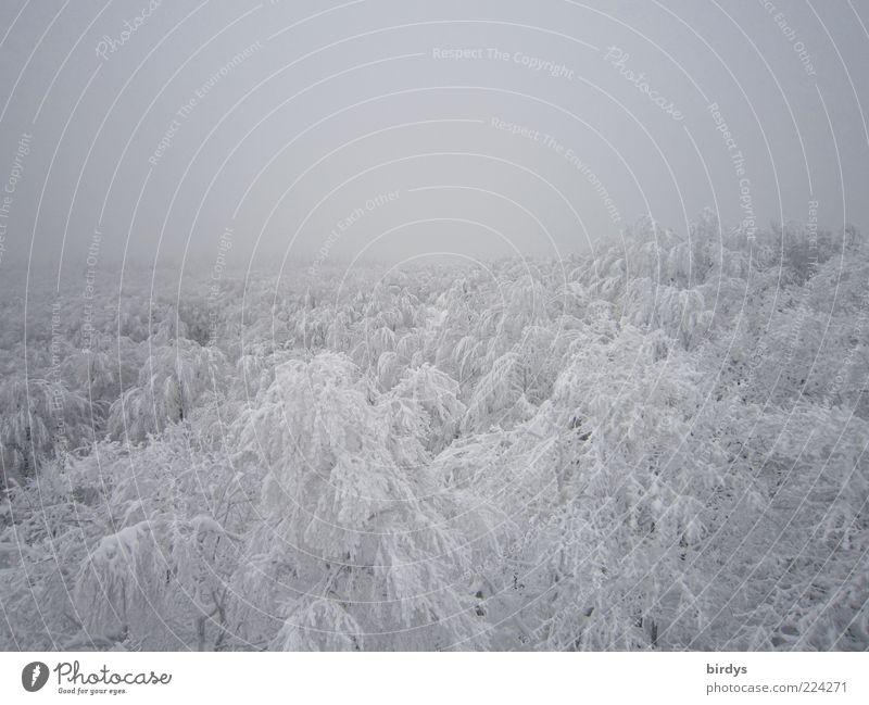 Birdyspektive Natur weiß Baum schön Winter ruhig Ferne Einsamkeit Wald kalt Schnee oben hell Eis Horizont Nebel