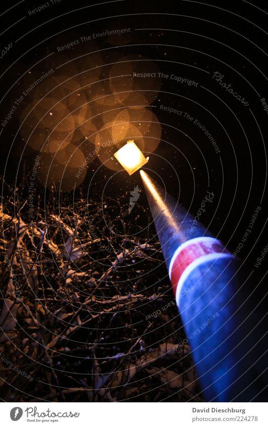 Nächtliche Winterromantik Pflanze Baum schwarz Perspektive Lampe Laterne Straßenbeleuchtung leuchten glänzend Kreis Weitwinkel Schneefall Schneeflocke schön