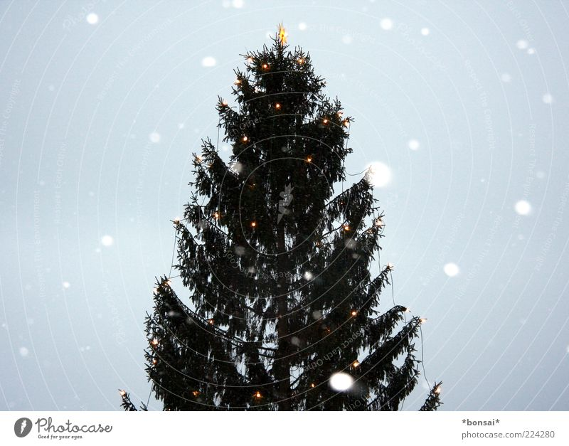 frohes fest euch allen! Himmel Winter Wetter schlechtes Wetter Schnee Schneefall Baum Tanne Weihnachtsbaum fallen frieren glänzend leuchten groß hoch kalt