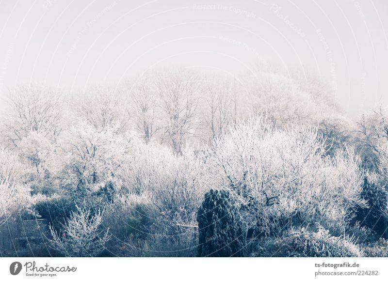 Puderwäldchen Umwelt Natur Landschaft Pflanze Urelemente Winter Eis Frost Schnee Baum Sträucher Wald kalt natürlich grau weiß Raureif Schneelandschaft
