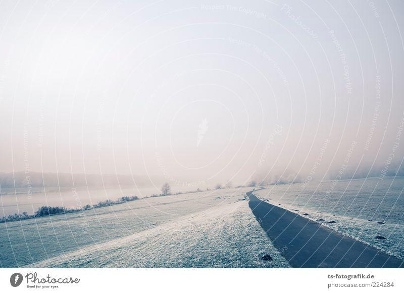 frostiger Spaziergang Umwelt Natur Landschaft Pflanze Urelemente Luft Winter Wetter Nebel Eis Frost Baum Wiese Feld Seeufer Flussufer Wege & Pfade Ferne grau