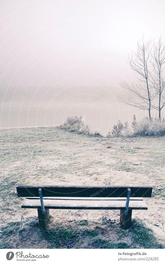 *** 400 *** Frohe Weihnachten!!! Natur Wasser weiß Baum Pflanze Winter Einsamkeit kalt Schnee grau Landschaft Gras Umwelt Küste Eis Nebel