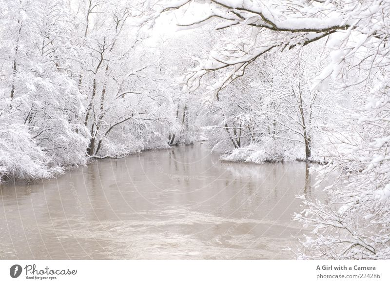 A Merry Xmas to you All Natur weiß Baum Winter ruhig kalt Schnee Eis Frost Fluss einzigartig Ast frieren Flussufer friedlich bedeckt