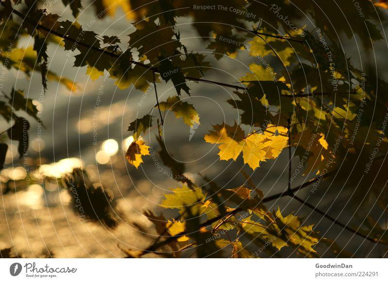 Blattrausch Umwelt Natur Pflanze Wasser Sonnenlicht Herbst Baum schön Gefühle Stimmung Farbfoto Außenaufnahme Menschenleer Tag Schwache Tiefenschärfe Herbstlaub