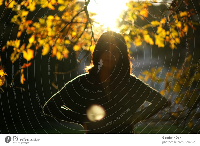 Der Sonne trotzen V Mensch feminin Junge Frau Jugendliche 18-30 Jahre Erwachsene Umwelt Natur Herbst Pflanze Baum Blatt Park stehen leuchten träumen warten