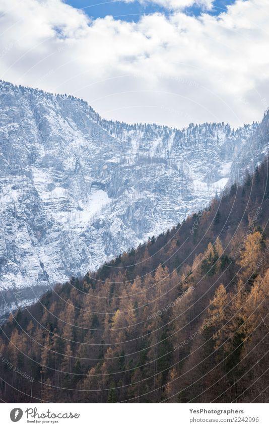 Landschaft Umwelt Schnee außergewöhnlich Verschiedenheit Österreich Nadelwald temporär Umsatz Überleitung
