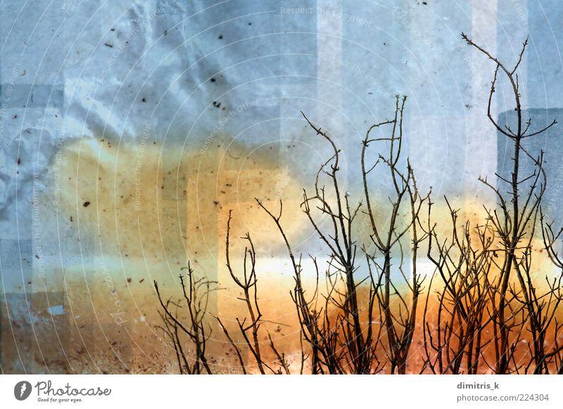 Zweige Jahrgang Natur Pflanze Baum Papier alt verblüht dreckig natürlich retro Verfall Kofferraum Buchse Ast Niederlassungen laublos verblassend Grunge gefärbt