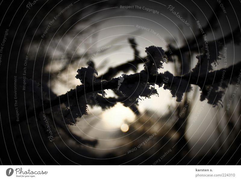Eis und Schnee Natur Pflanze Winter dunkel Frost Ast gefroren Anschnitt Bildausschnitt Klima Vignettierung Schattenseite