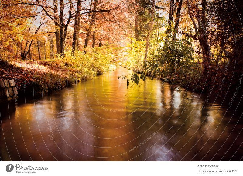 bunter herbst Umwelt Natur Landschaft Pflanze Urelemente Luft Wasser Sonnenlicht Herbst Wetter Schönes Wetter Baum Sträucher Park Wald Fluss Farbfoto