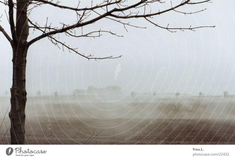 Nebel-Felder 3 Natur Baum Strand Ferien & Urlaub & Reisen Einsamkeit Traurigkeit Landschaft Feld Küste Nebel Erde Romantik Sträucher Ostsee Mecklenburg-Vorpommern Nebelbank