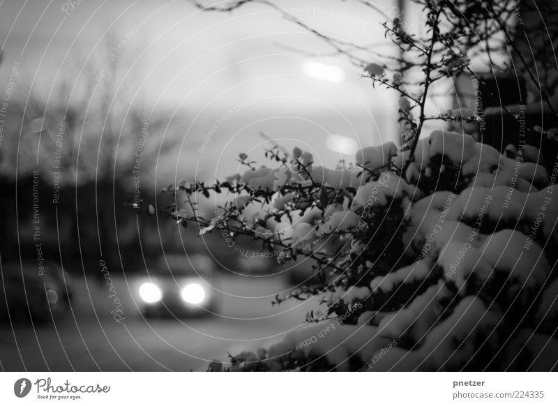 Schneechaos Winter Straße kalt grau Bewegung PKW Wetter Eis Verkehr Klima gefährlich Frost Sträucher fahren Mobilität