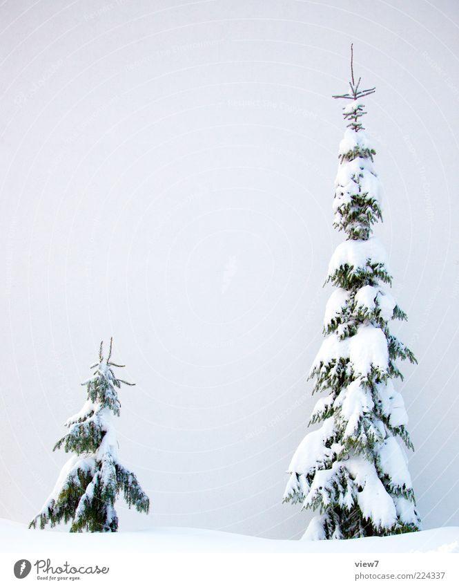Neuschnee Himmel Natur weiß Baum schön Winter kalt Schnee Stimmung Wetter Eis groß frisch natürlich Frost authentisch