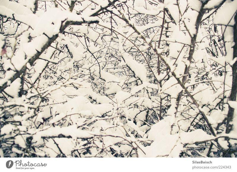 Winterzauber Natur Eis Frost Schnee Farbfoto Außenaufnahme Zweige u. Äste viele Nahaufnahme Menschenleer Tag