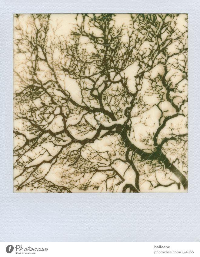 Schneeige Verästelung Umwelt Natur Pflanze Winter Eis Frost Baum Holz ästhetisch chaotisch Netzwerk Fraktal Schwarzweißfoto Gedeckte Farben Außenaufnahme
