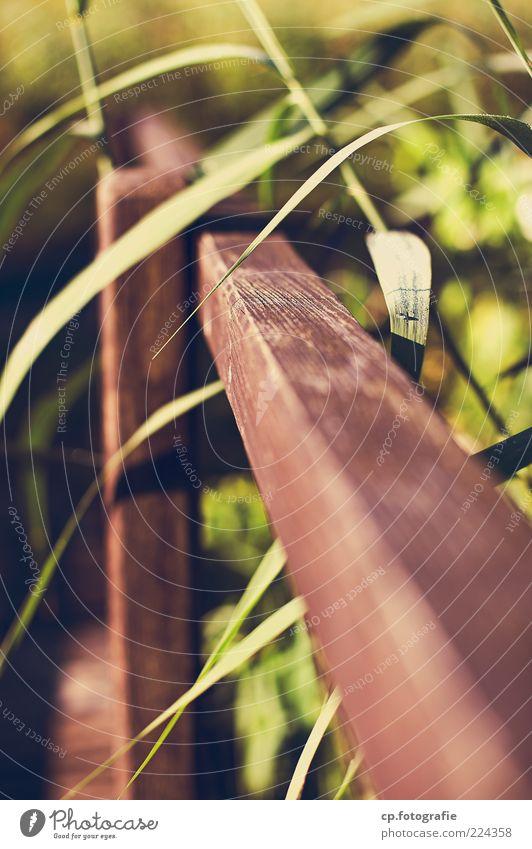 #179524 Natur Pflanze Sonnenlicht Frühling Sommer Schönes Wetter Blatt Grünpflanze Brücke weich Brückengeländer Schilfrohr Holz Maserung Licht Schatten Kontrast