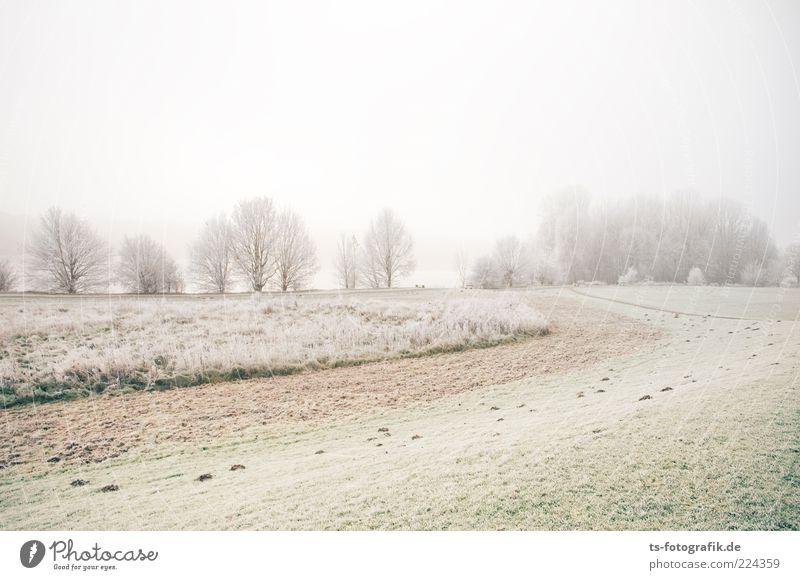 Zuckerlandschaft Himmel Natur weiß Baum grün Pflanze Winter Wald kalt Wiese Landschaft Gras Umwelt Wetter Eis Erde