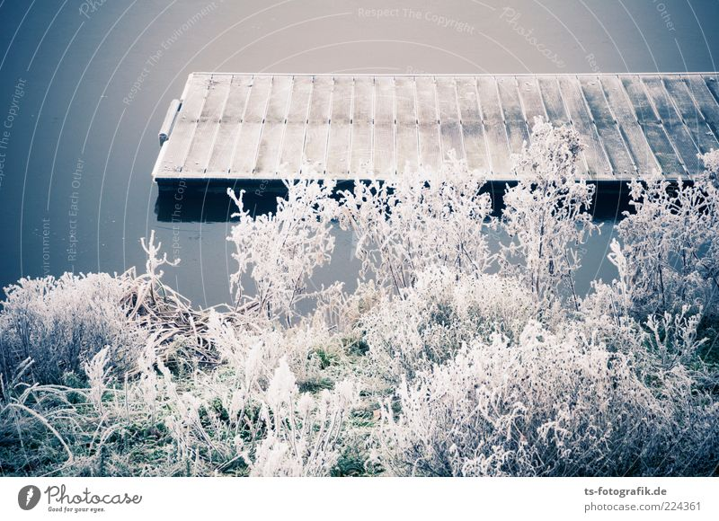 Winter-Anleger I Natur Wasser weiß Pflanze kalt grau Landschaft Gras Umwelt Küste Wetter Eis ästhetisch Frost Sträucher