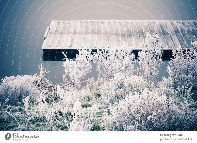 Winter-Anleger I Umwelt Natur Landschaft Pflanze Urelemente Wasser Wetter Eis Frost Gras Sträucher Küste Seeufer Flussufer ästhetisch kalt grau weiß Raureif