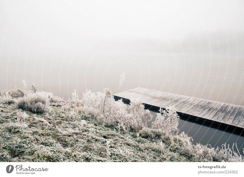 Winter-Anleger II Umwelt Natur Landschaft Pflanze Urelemente Wasser Wetter Nebel Eis Frost Schnee Gras Sträucher Küste Seeufer Flussufer kalt blau grün weiß