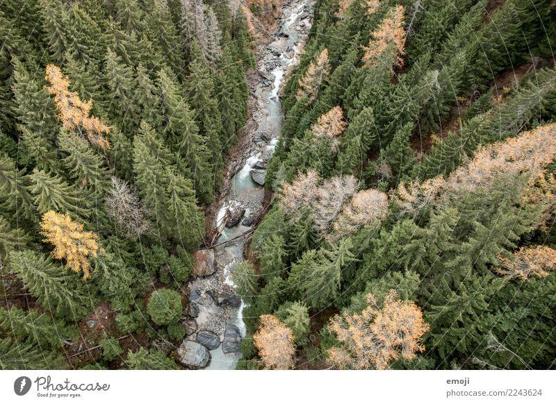 Fluss Umwelt Natur Landschaft Wasser Herbst Pflanze Baum Wald grün Erholung Farbfoto Außenaufnahme Menschenleer Tag Vogelperspektive Weitwinkel