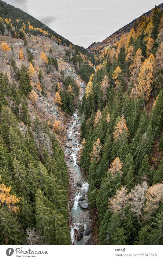 Fluss Umwelt Natur Landschaft Wasser Herbst Pflanze Baum Wald grün Erholung Farbfoto Außenaufnahme Menschenleer Tag Vogelperspektive Weitwinkel Schweiz
