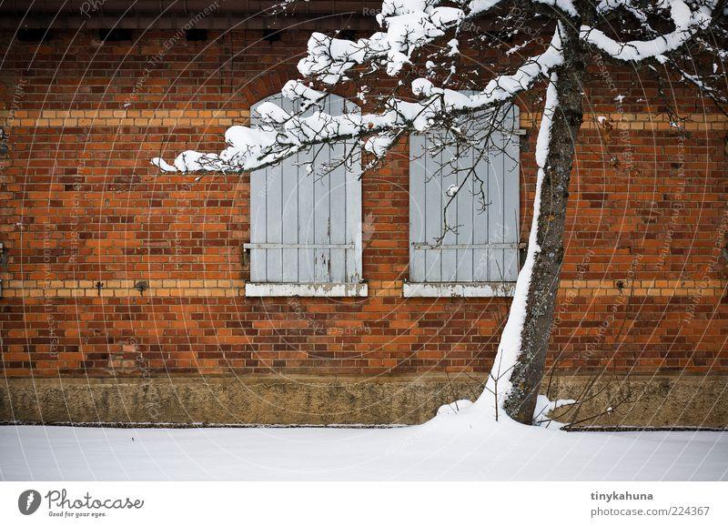 TrÜbPl Militärgebäude Winter Schnee Baum Baracke Mauer Wand Fenster Fensterladen Backstein frieren alt einfach kalt braun gelb weiß Einsamkeit ruhig