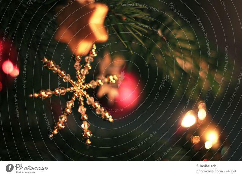 Oh Tannenbaum Weihnachten & Advent Baum schön hell Feste & Feiern glänzend gold Stern (Symbol) Kerze Dekoration & Verzierung Kitsch Weihnachtsbaum