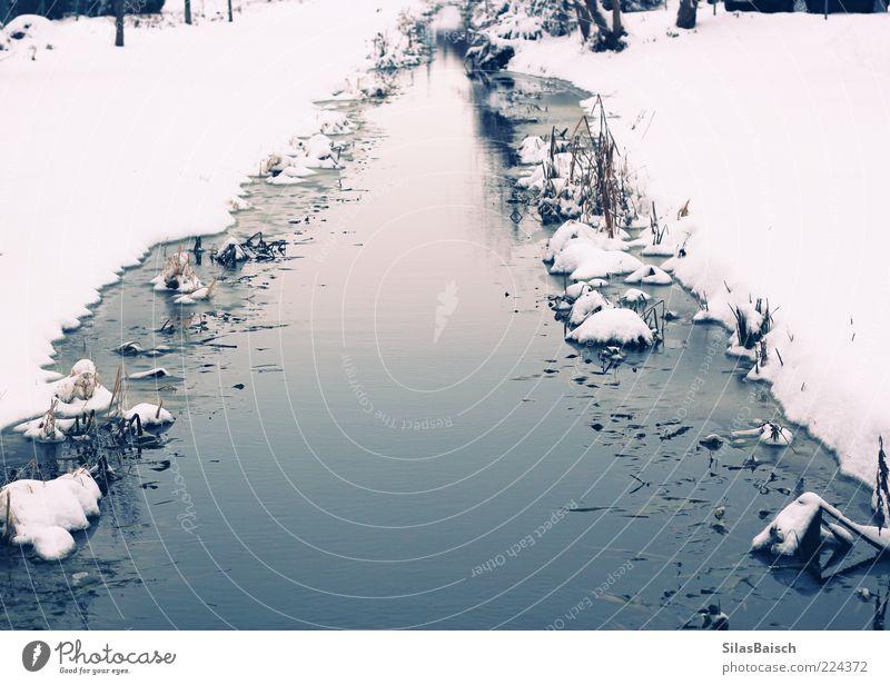 Überm großen Teich Natur Wasser weiß blau Winter ruhig kalt Schnee Freiheit Landschaft Umwelt Küste Stimmung Eis Hoffnung Frost