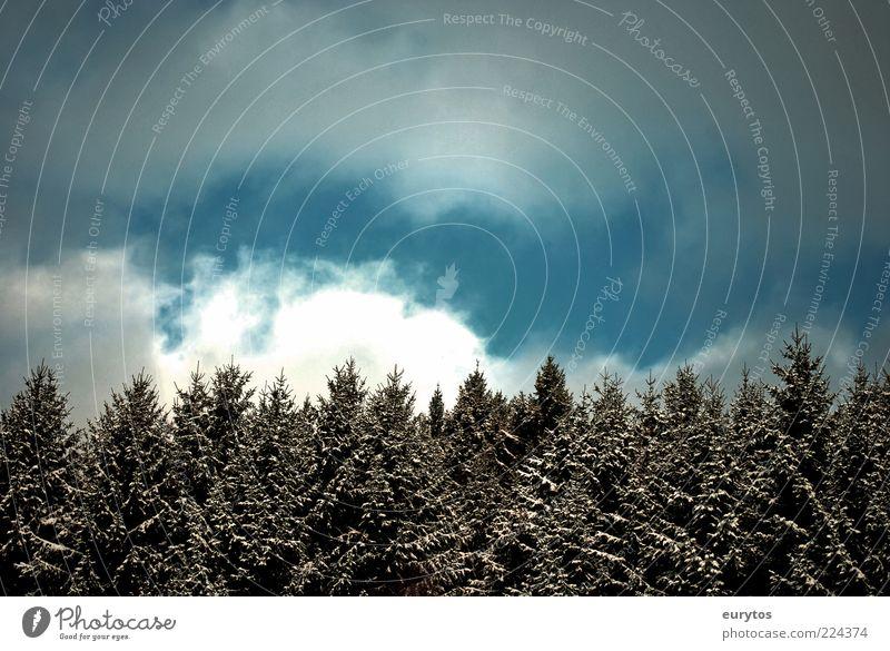 Winterwald Umwelt Natur Landschaft Pflanze Himmel Wolken Klima Klimawandel Wetter Unwetter Wind Sturm Gewitter Eis Frost Schnee Grünpflanze Wald oben blau weiß