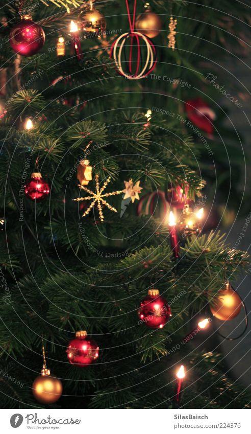Noch klassischer Feste & Feiern Baum Tanne Tannenzweig Weihnachtsbaum Tannennadel Dekoration & Verzierung Lichterkette Weihnachtsstern Weihnachtsdekoration