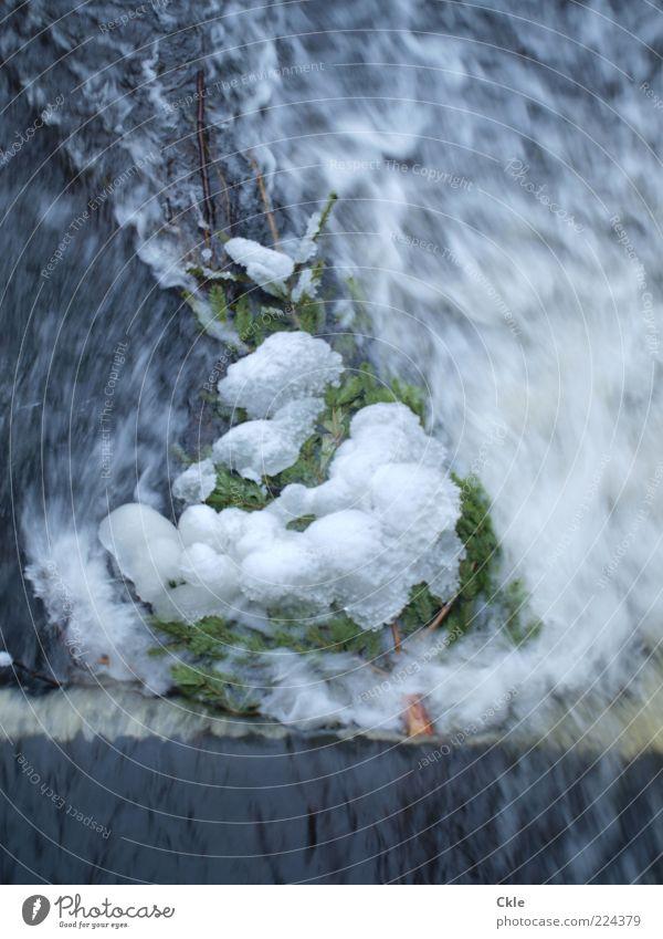 Im Fluss Natur Wasser blau grün weiß Baum Winter kalt Schnee Umwelt Feste & Feiern Eis Frost Fluss Vergänglichkeit Weihnachtsbaum