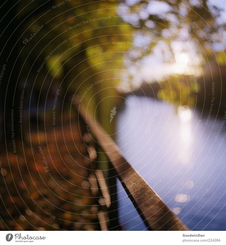 focus. Umwelt Natur Urelemente Wasser Sonne Sonnenlicht Herbst Wetter Schönes Wetter Park Fluss Geländer außergewöhnlich authentisch fantastisch schön Gefühle