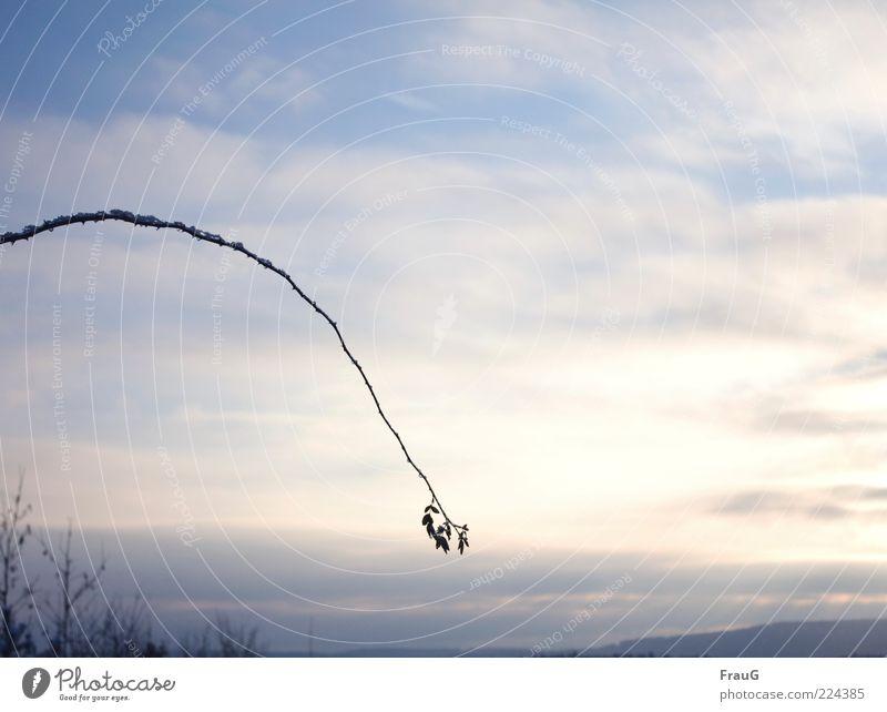 abgebogen Himmel Natur Wolken Winter Ferne Landschaft Stimmung Eis Horizont Frost hängen Bogen Zweige u. Äste Hagebutten Wolkenhimmel