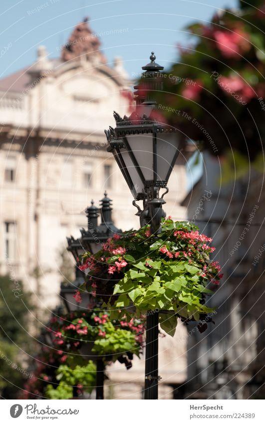 Dekorativ Pflanze Blume Budapest Hauptstadt Altstadt Gebäude grün schwarz Straßenbeleuchtung Kandelaber altmodisch Blumenschmuck Dekoration & Verzierung schön