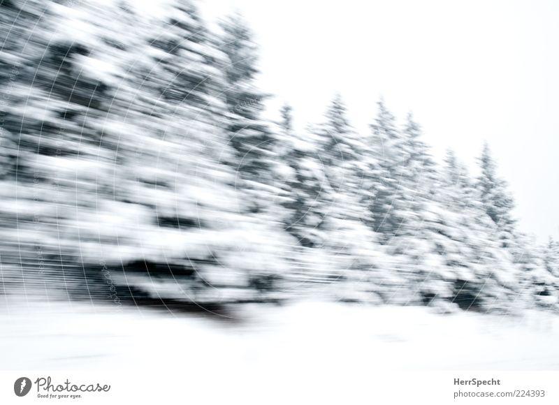 Winterwald on Speed Natur weiß grün Wald Landschaft Schnee Geschwindigkeit fahren Tanne Schneelandschaft schlechtes Wetter Nadelwald Winterstimmung Waldrand