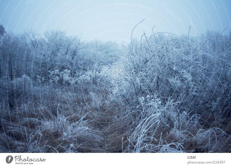 eisig Natur Landschaft Winter Schönes Wetter Eis Frost Schnee Baum Gras Sträucher Wildpflanze Wiese Feld Wald frieren kalt blau schwarz silber weiß Farbfoto