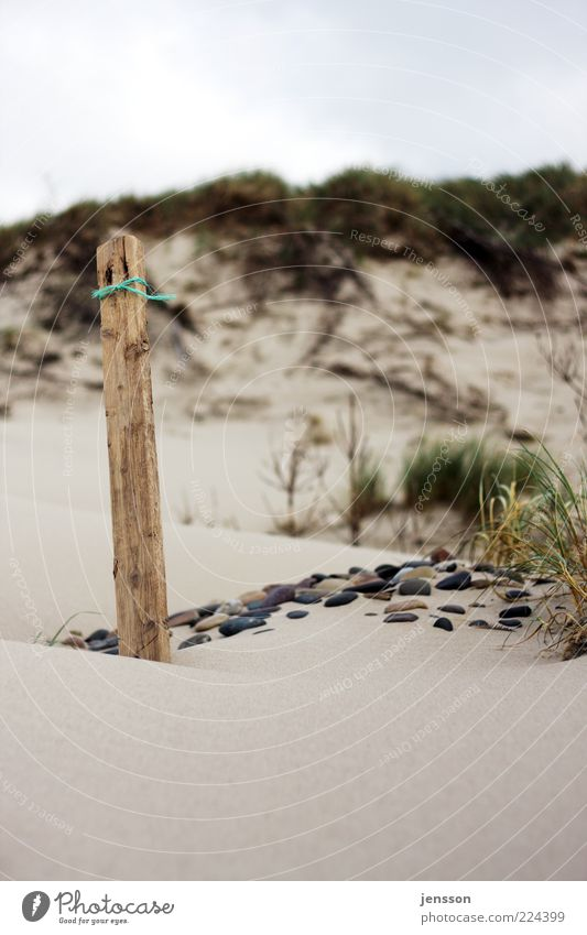 Snøre Umwelt Natur Landschaft Sand Küste Strand Stein Holz stehen ruhig Gras Strandgut Holzpfahl Pfosten Stranddüne Dünengras Farbfoto Detailaufnahme