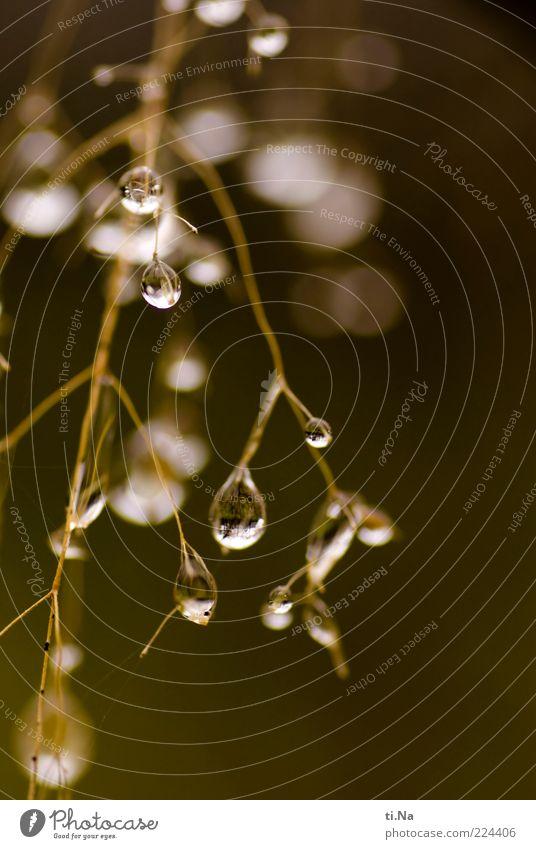 4 Jahre PC-Helgi Natur Wasser Pflanze Herbst Gras Umwelt glänzend Wassertropfen Stengel hängen Makroaufnahme Pflanzenteile