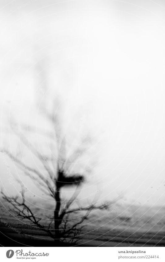blur Baum Winter dunkel Schnee abstrakt unklar Zweige u. Äste wahrnehmen laublos
