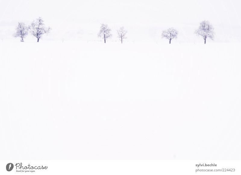 Ein Hauch von Nichts Himmel Natur weiß Baum Winter ruhig Einsamkeit kalt Schnee Umwelt Landschaft hell Wetter Feld Klima minimalistisch