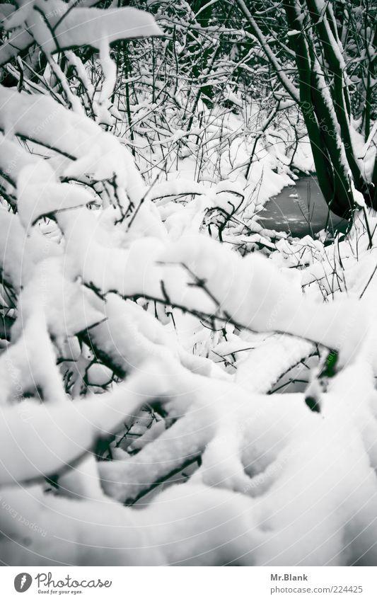 winterlich III Natur Wasser Winter Wetter Eis Frost Schnee Baum Wildpflanze Wald Bach frieren Blick warten kalt schwarz weiß Umwelt Ferne ruhig ruhen Ast