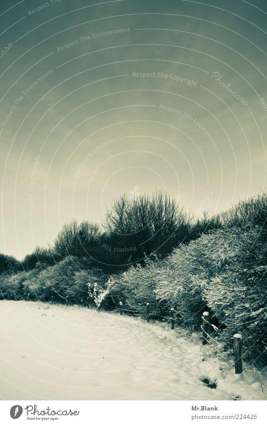 winterlich XI Himmel weiß Baum Winter Einsamkeit schwarz kalt Schnee Freiheit Landschaft Wege & Pfade Wetter Eis warten Frost Sträucher