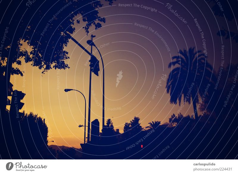 Himmel Horizont Palme Ampel Umrisslinie