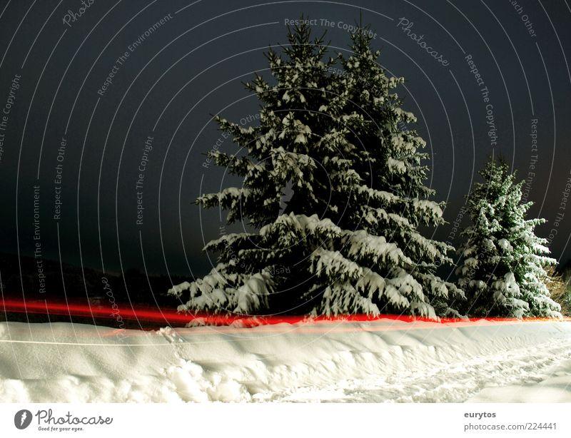 Rotlicht-Tanne Umwelt Natur Landschaft Winter Klima Eis Frost Schnee leuchten rot schwarz weiß Baum Lichtstreifen Farbfoto Außenaufnahme Textfreiraum links