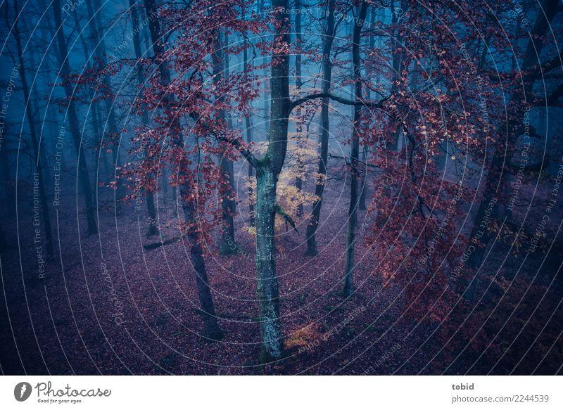 Herbstansicht Pt.2 Natur Pflanze Farbe Landschaft Einsamkeit Wald dunkel kalt Nebel ästhetisch Idylle einzigartig bedrohlich Urelemente Baumstamm