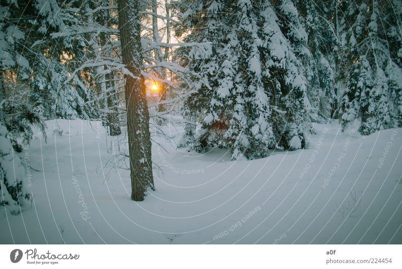***cool*** Sonne Winter Schnee Umwelt Natur Landschaft Sonnenaufgang Sonnenuntergang Sonnenlicht Wetter Schönes Wetter Wald Menschenleer Farbfoto Außenaufnahme